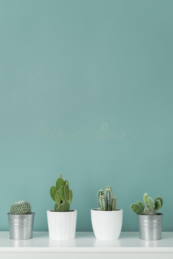 Collection of various potted cactus house plants on white shelf against pastel turquoise colored wall. Cactus plants background. Modern room decoration stock image
