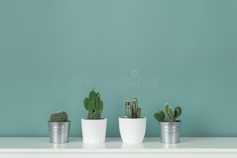 Modern room decoration. Collection of various potted cactus house plants on white shelf against pastel turquoise colored wall. Cactus plants background royalty free stock image