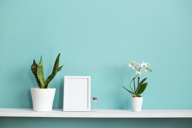 Picture frame mockup. White shelf against pastel turquoise wall with potted orchid and snake plant royalty free stock photo