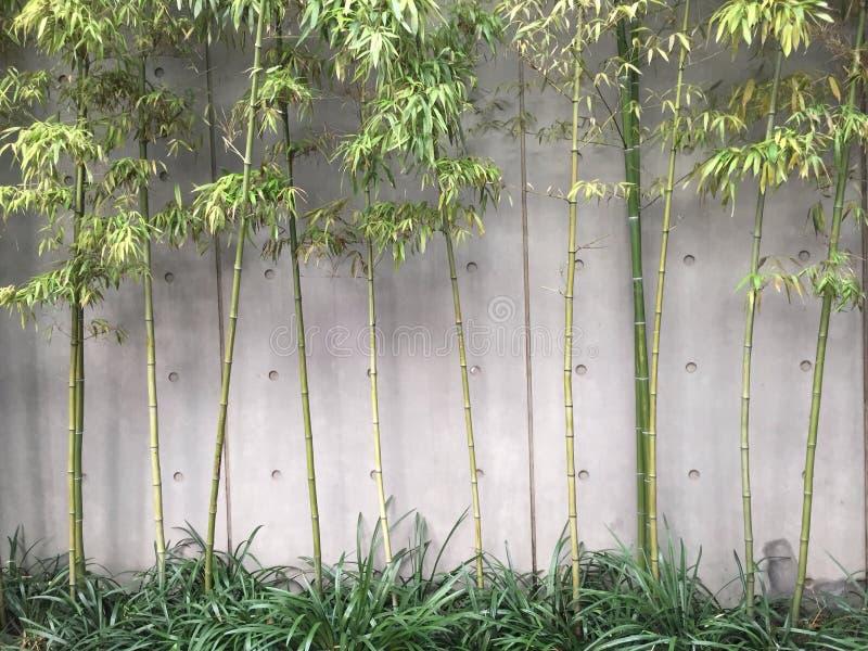 Modern stil för trädgårds- bambu royaltyfri fotografi