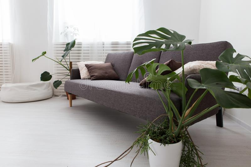 Download Modern Studio Apartment With Living Plants. Gray In The Interior.  Sofa In The