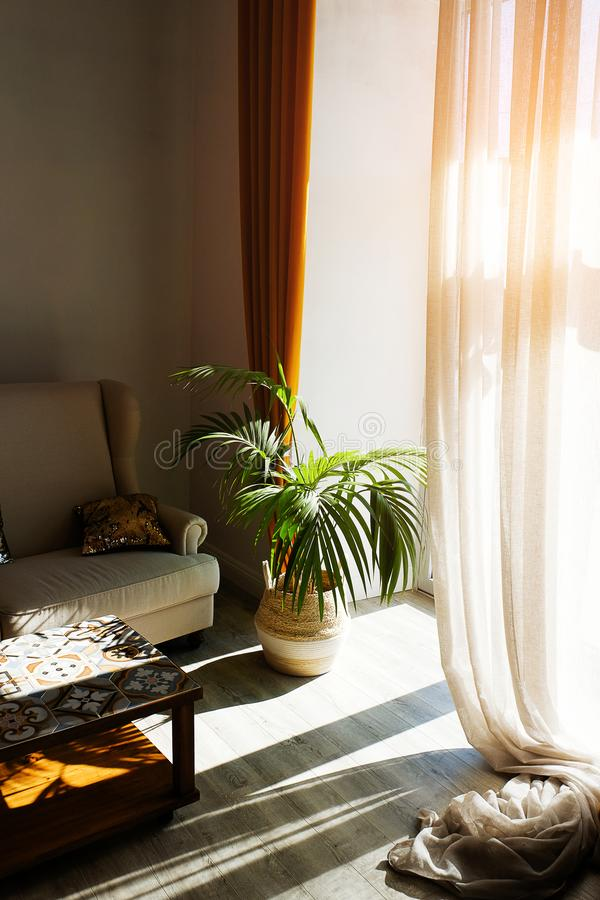 Modern stylish design of the apartment or room with a sofa, coffee table, curtains, tulle, against the beige wall. Hereinafter, a stock photos