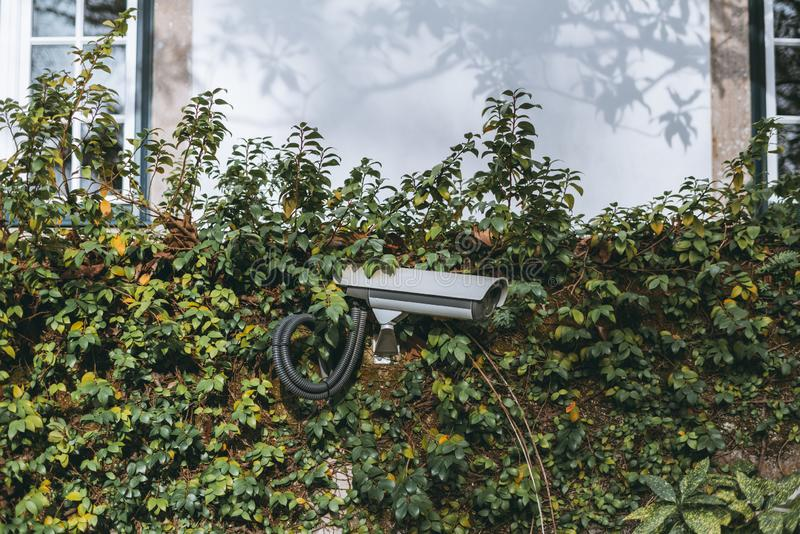 Security video cam on a quick-fence. A modern surveillance video cam attached to the wall of a private property overgrown with greenery; a security video camera stock images