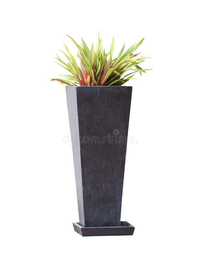Moderne Art des eingemachten Baums lokalisiert auf weißem Hintergrund lizenzfreies stockfoto