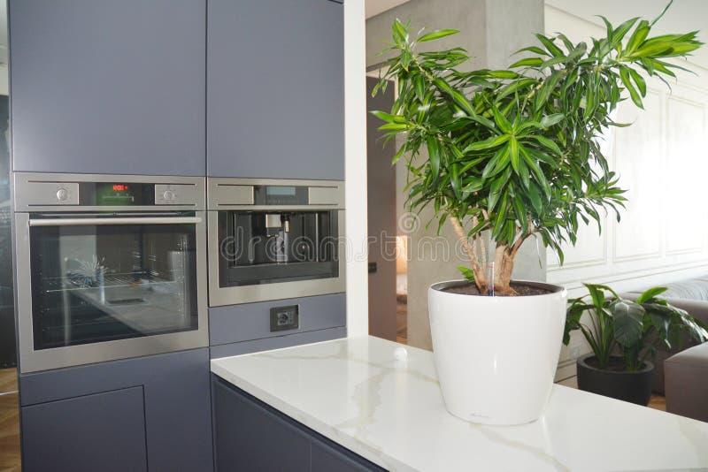 Moderne Küche mit Elektroofen, Elektroherd, Kaffeemaschine, modernem Küchentisch und Hausblütenfoto lizenzfreie stockfotos