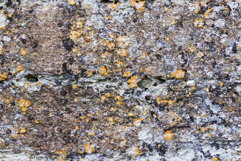 Moderne kunst in aard Natuurlijke korstmosorganismen op concrete muur royalty-vrije stock fotografie