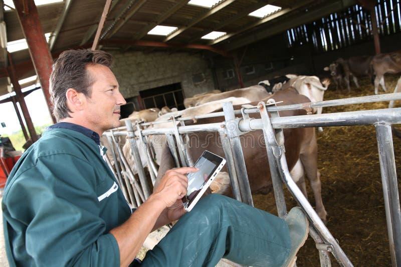 Moderne landbouwer met tablet in schuur stock afbeeldingen