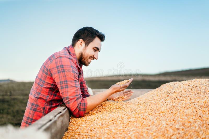 Moderne Maaidorsendetails - mensenlandbouwers die van geoogst graan genieten royalty-vrije stock foto's