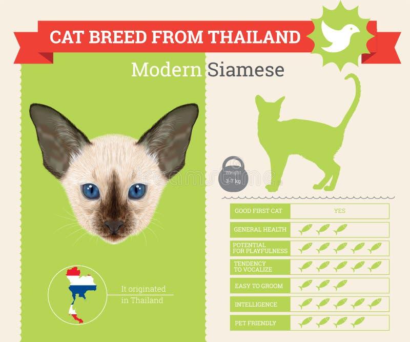 Moderne Siamese infographics van het Kattenras royalty-vrije illustratie