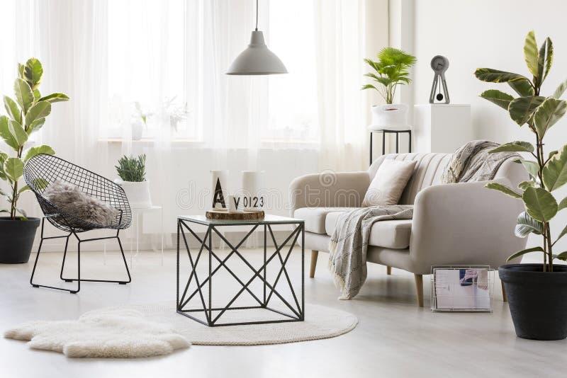 Moderne woonkamer met ficus stock afbeeldingen