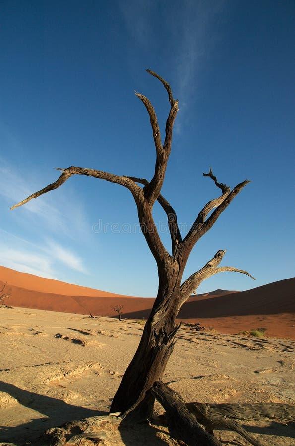 Moderner abstrakter toter Baum stockfotos