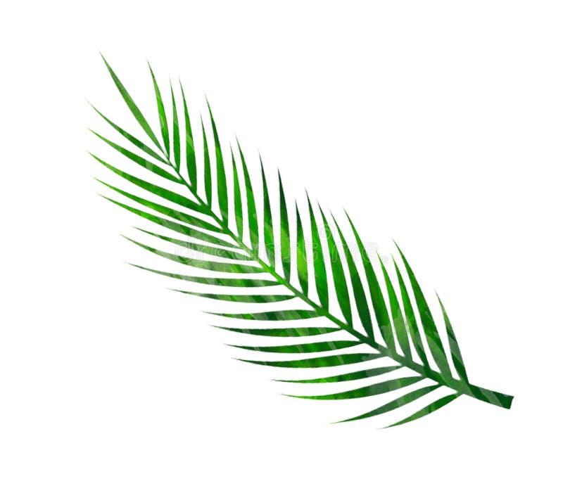 Moderner dekorativer Elementsatz des Aquarells Runder grüner Kranz Blatt des Eukalyptus, Grünniederlassungen, Girlande, Grenze, R vektor abbildung