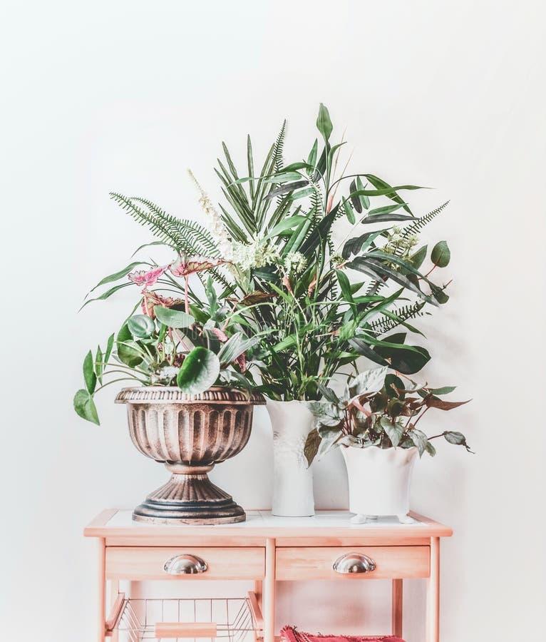 Modernes Stillleben mit Zimmerpflanzen in den Töpfen und im Vase auf Holztisch, Vorderansicht Pilea peperomioides, Bambus, Begoni stockbild