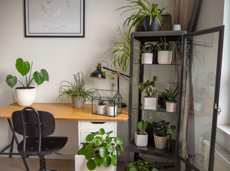 Modernt industriellt svartvitt studierum med talrika gröna houseplants liksom pannkakaväxter och kakturs royaltyfri fotografi