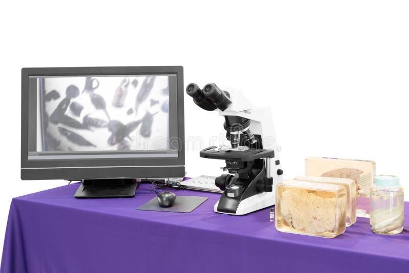 Modernt mikroskop med leverlyckträffen arkivbilder