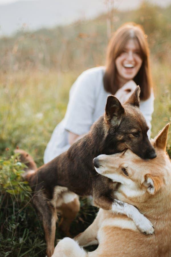 Modieus bohomeisje en twee leuke honden die in gras en wildflowers in zonnige weide in bergen bij zonsondergang spelen Samen het  stock foto