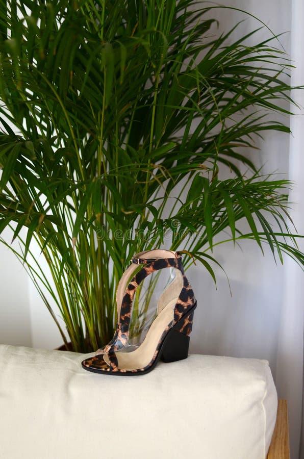 Modieuze hoge hielenschoenen in dierlijk drukontwerp, met hoge hielenschoen in bruin su?de en met platformzool in hout royalty-vrije stock fotografie