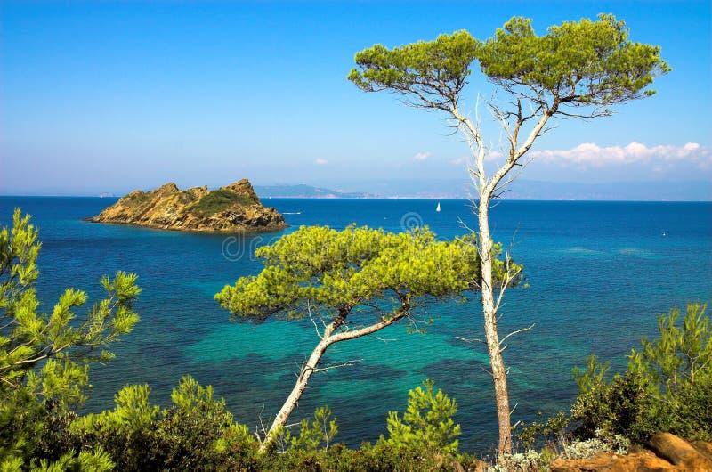 Modific il terrenoare con i pini sull'isola del d'Azure del Cote fotografia stock libera da diritti