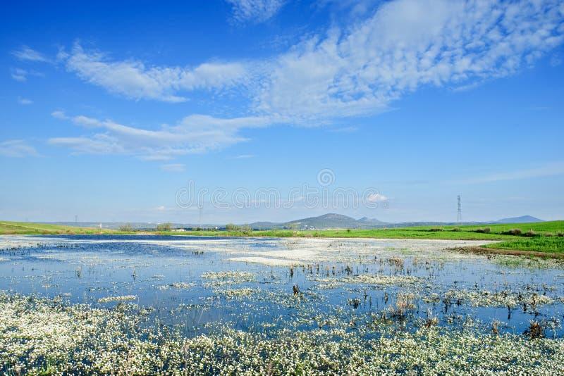 Modific il terrenoare con un lago pieno dei fiori sull'acqua immagini stock