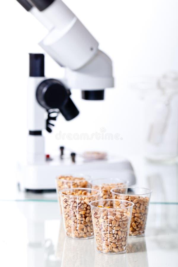Modificação genética foto de stock