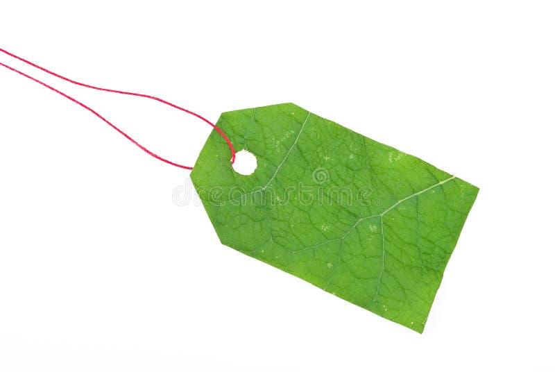 Modifica verde del foglio immagine stock