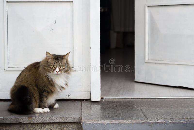 Modig fet katt som bevakar hemmet som framme står, royaltyfria bilder