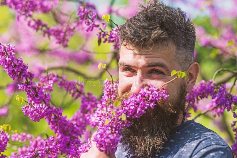 Modniś cieszy się aromat fiołkowy okwitnięcie Mężczyzna z brodą i wąsy na uśmiechniętej twarzy blisko kwitnie na słonecznym dniu  zdjęcie royalty free