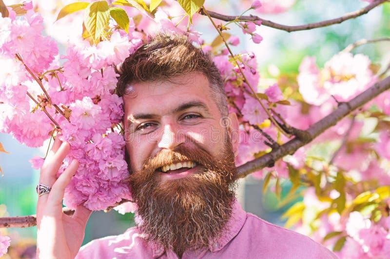 Modniś w różowej koszulowej pobliskiej gałąź Sakura Mydlarni pojęcie Mężczyzna z brodą i wąsy na uśmiechniętej twarzy blisko Saku obraz royalty free
