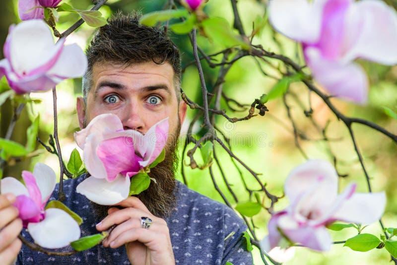 Modniś cieszy się aromat okwitnięcie Brodaty mężczyzna z świeżym ostrzyżeniem obwąchuje kwiat magnolia Perfumer pojęcie 308 mosię obraz stock