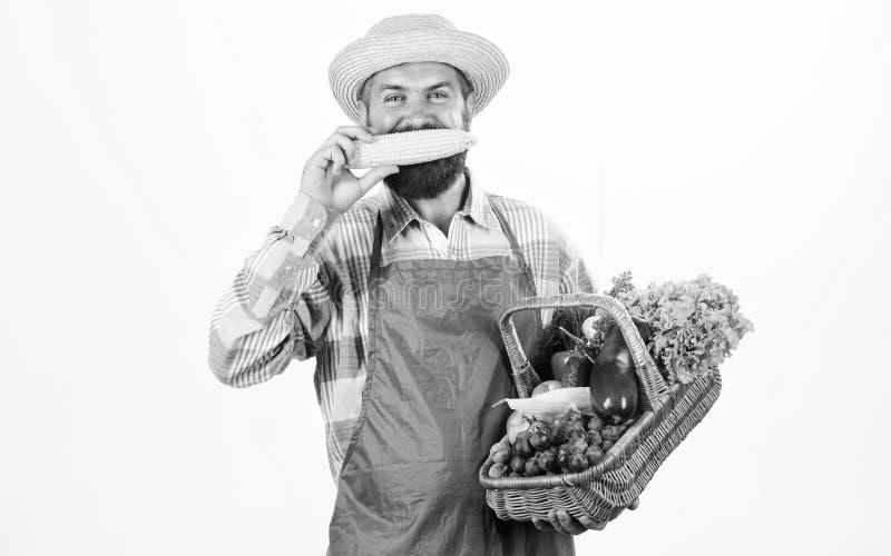 Modniś ogrodniczki odzieży fartuch niesie warzywa Mężczyzna warzyw brodaty przedstawia biały tło odizolowywający Średniorolna sło fotografia stock