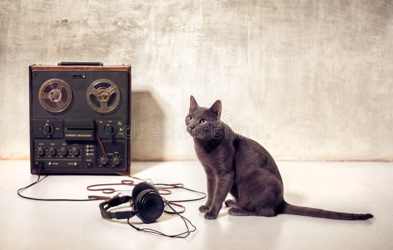 Modnisia zwierzęcia domowego kot z magnetophone i hełmofonami zdjęcia royalty free