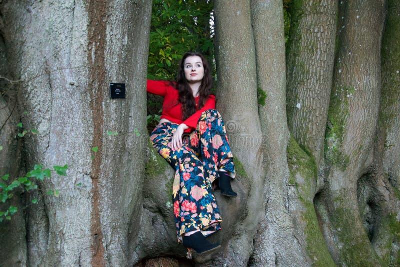 Modny damy obsiadanie w bukowym drzewie zdjęcia royalty free