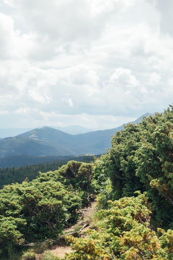 Modo alle montagne attraverso i cespugli verdi fotografie stock