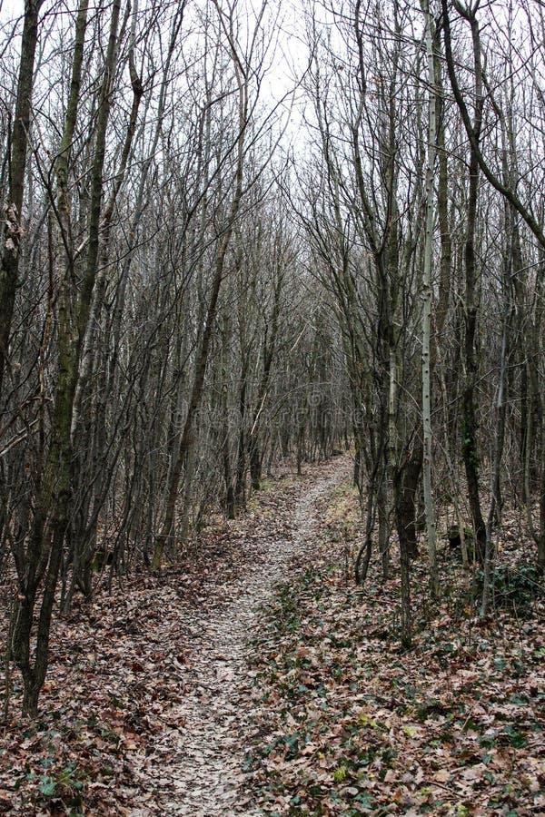 Modo attraverso gli alberi fotografia stock
