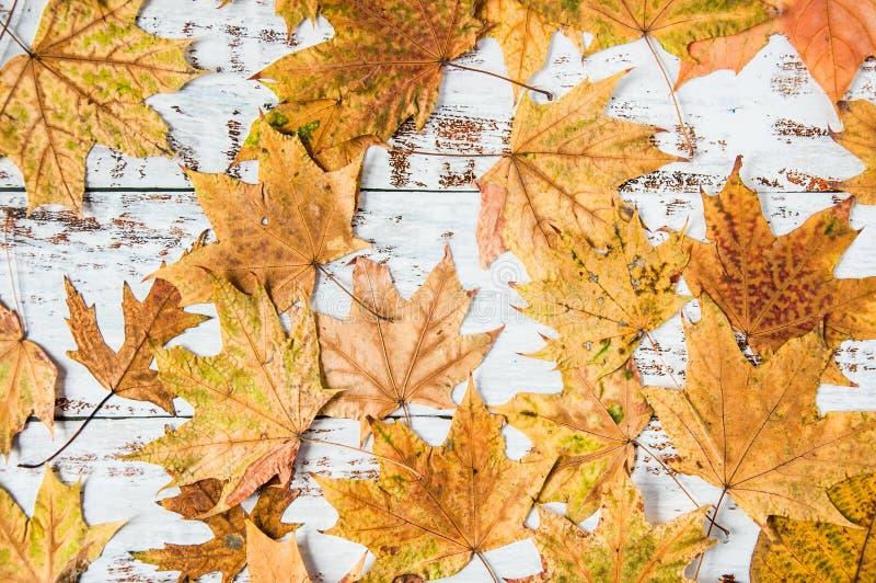 Modo de outono Folhas amarelas e laranja sobre fundo de madeira Muitas folhas secas e castanhas Materiais naturais imagens de stock royalty free