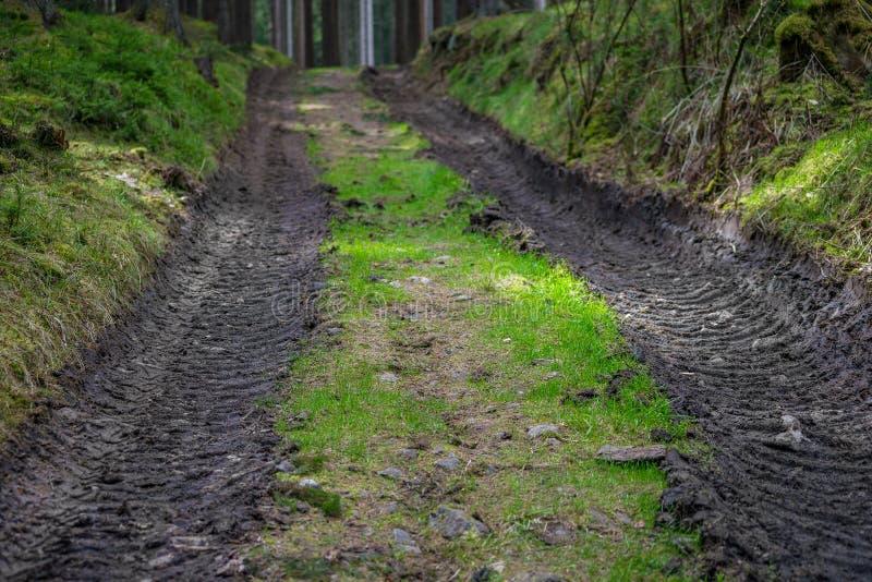 Modo del fango della strada forestale della foresta nel verde fotografia stock libera da diritti