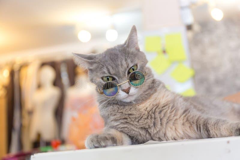 Modo del gatto con i vetri di sole fotografie stock libere da diritti