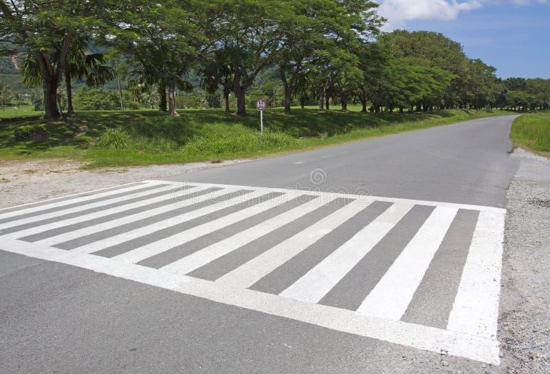 Modo della camminata di traffico della zebra, modo trasversale immagine stock libera da diritti