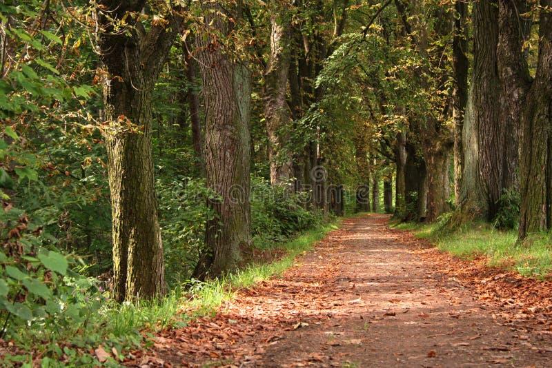 Modo della foresta fotografia stock libera da diritti