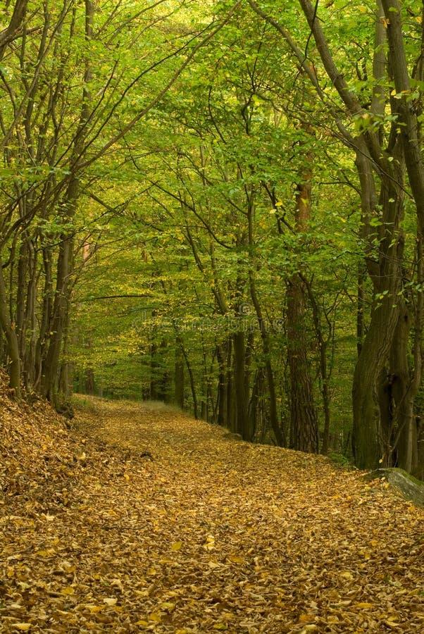 Modo della foresta fotografia stock