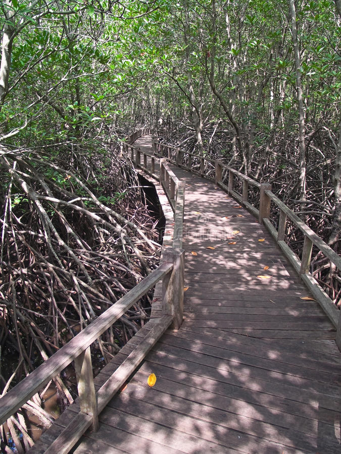 Modo della mangrovia fotografia stock libera da diritti
