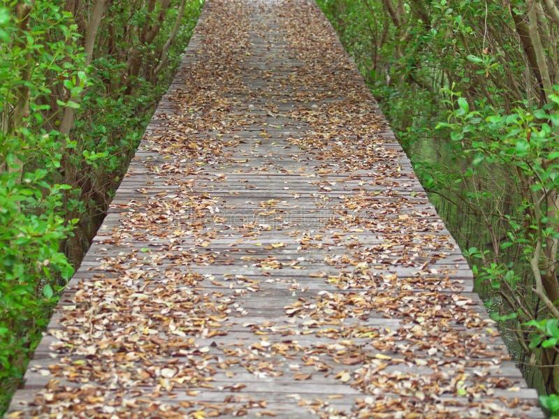 Modo della mangrovia fotografia stock