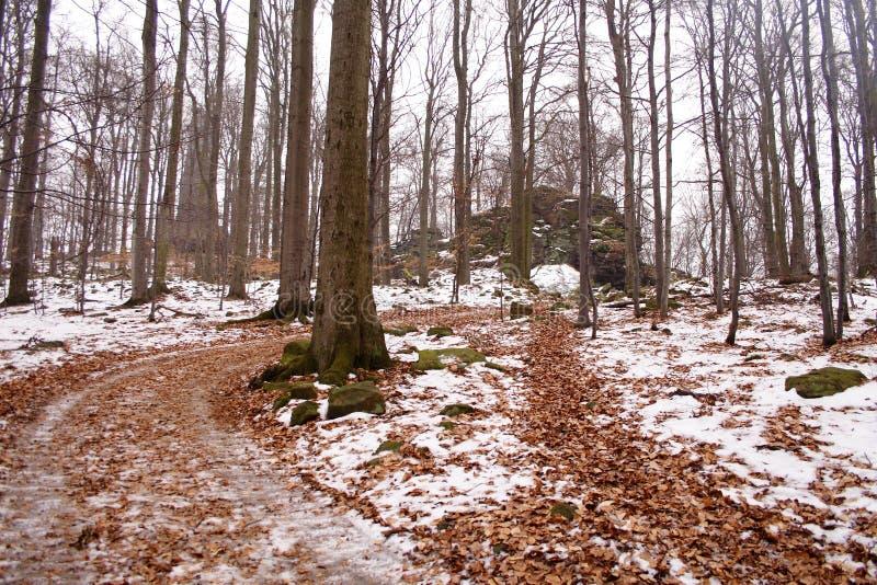 Modo della passeggiata del sentiero nel bosco nell'inverno fotografia stock
