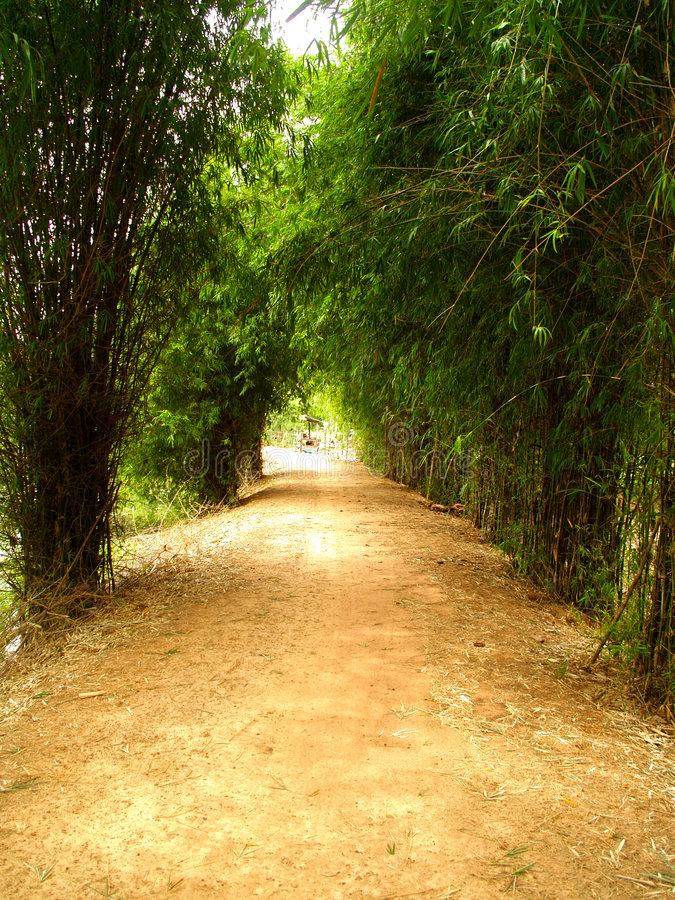 Modo di bambù 6 fotografie stock