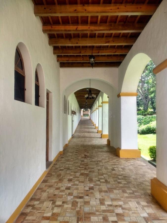 Modo di corridoio con il punto dell'erba con un albero fotografia stock libera da diritti