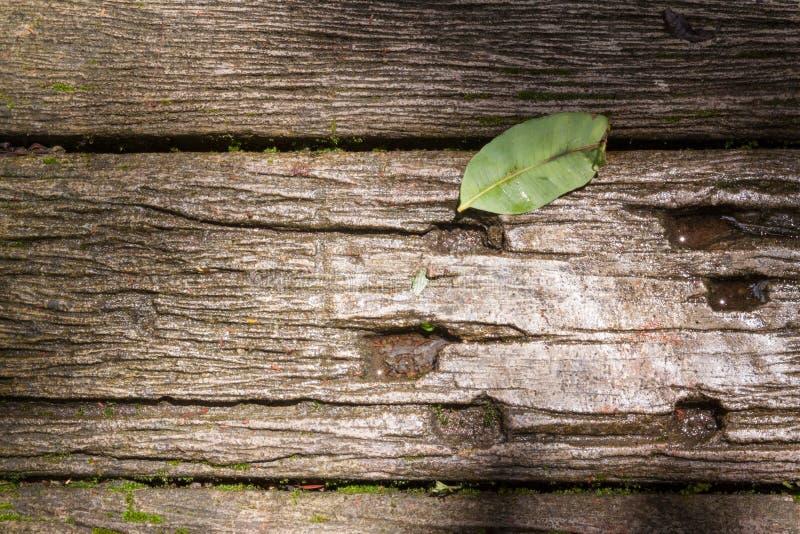 Modo di legno della passeggiata con la foglia caduta fotografie stock libere da diritti