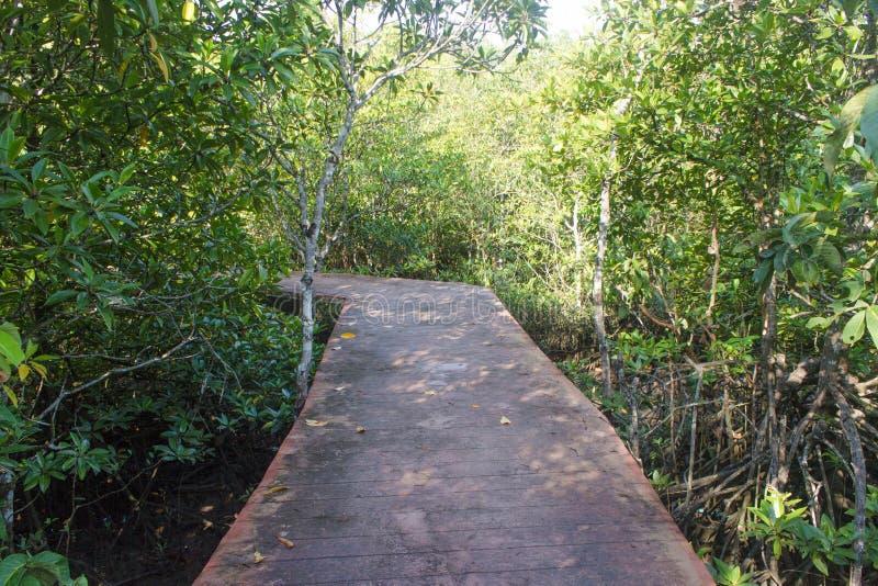 Modo di legno in foresta a Thapom, canzone Nam, Krabi di Klong, tailandese fotografia stock libera da diritti