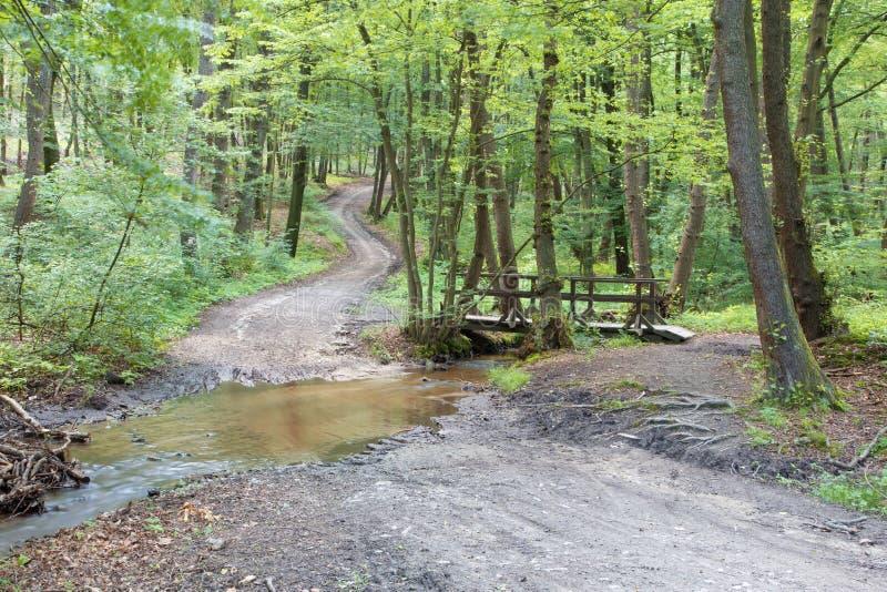 Modo e poco ponte nella foresta di primavera in piccolo carpatico - la Slovacchia fotografie stock