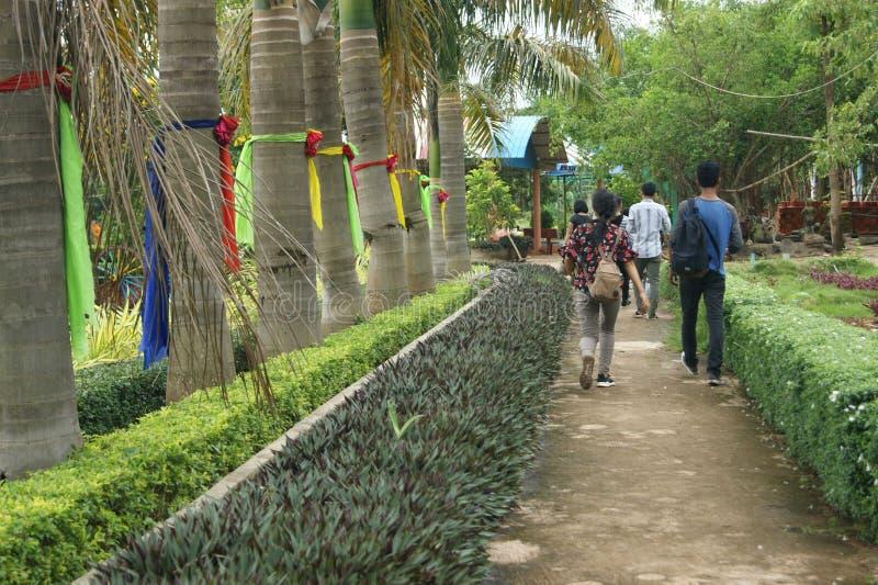 Modo naturale della passeggiata del giardino fotografia stock libera da diritti