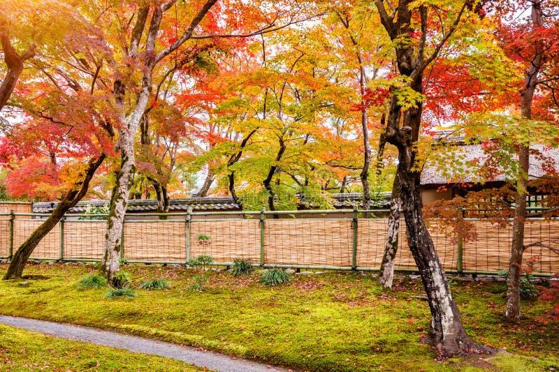 Modo variopinto delle foglie e della passeggiata di autunno in parco, Kyoto nel Giappone fotografia stock
